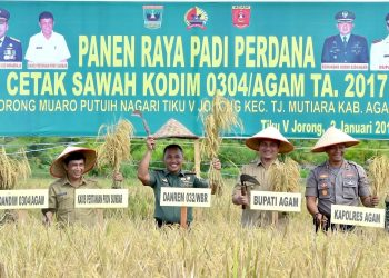 Panen padi perdana dilahan cetak sawah baru di Tiku V Jorong, Kecamatan Tanjung Mutiara, Kabupaten Agam
